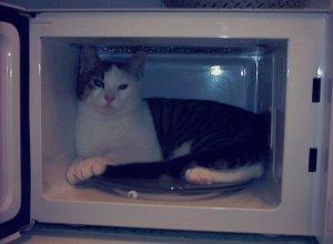 Scene che gelano il cuore: gatto messo nel microonde dai suoi padroni che postano il video su internet