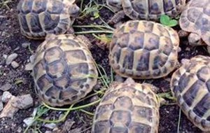 Sette tartarughe abbandonate sui binari, salvate da poliziotti