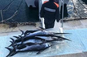 Sequestrati dalla Guardia costiera centinaia di piccoli esemplari pesce spada
