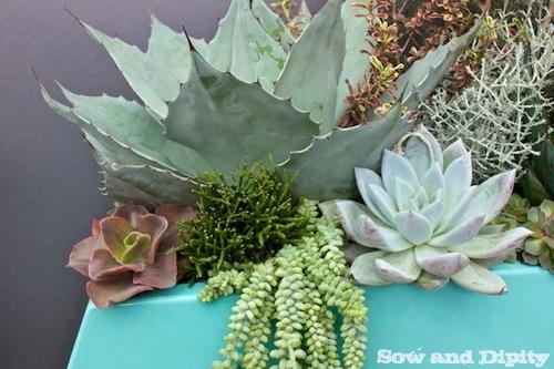 Spring Garden Inspirations