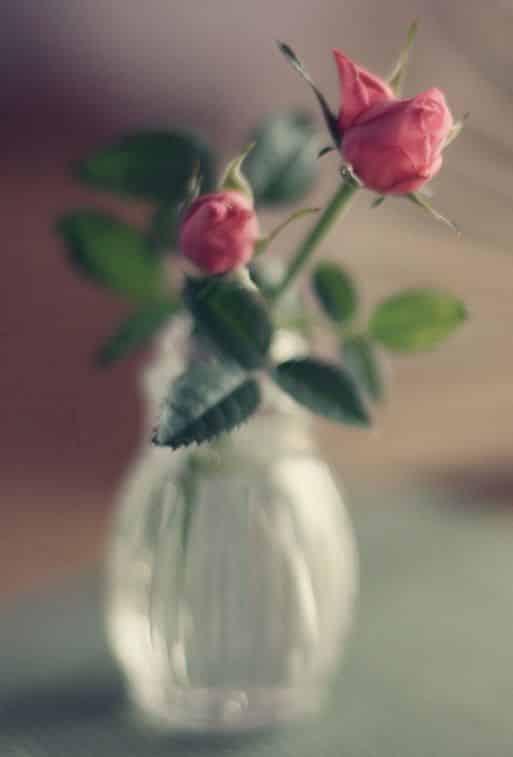 صور للأنستجرام ورود الحب