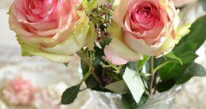 صور اجمل الورود فى العالم منوعة