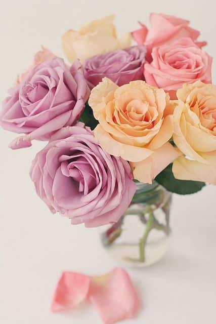 صور اجمل الورود فى العالم حلوه
