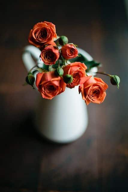 صور رائعة عن الورد