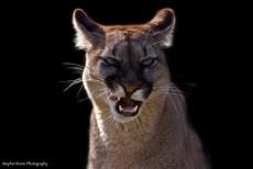 Mama lion scowling.