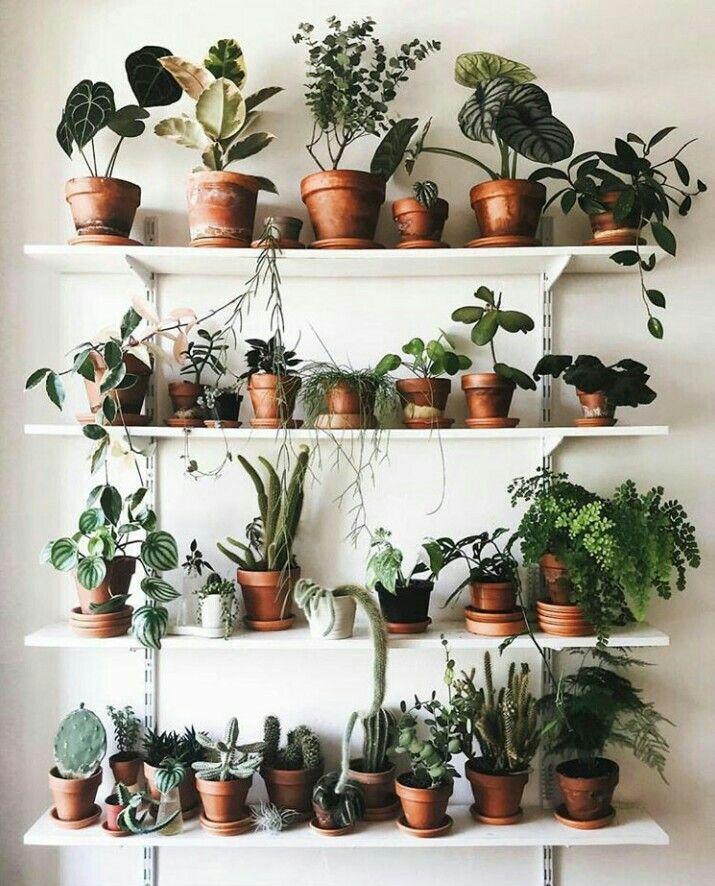 Étagères remplies de plantes sur un mur