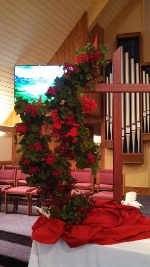 pentecost geraniums