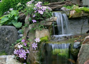 waterfall with rocks and flowers
