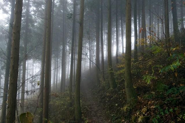 편백나무숲 속의 오솔길