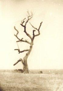 Сухото дърво на нос Колокита край Созопол