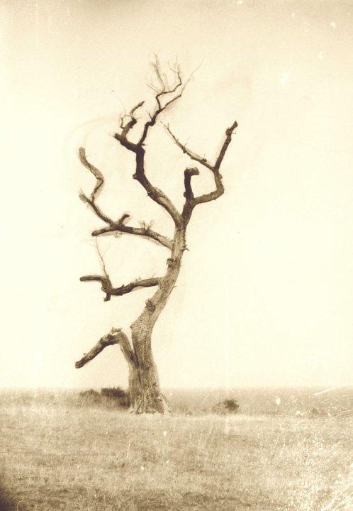 Сухото дърво край нос Колокита, Созопол