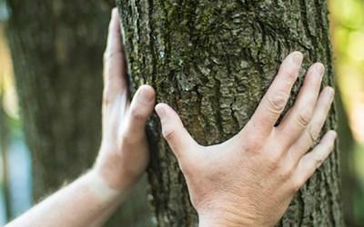 La nature, meilleure alliée de la santé