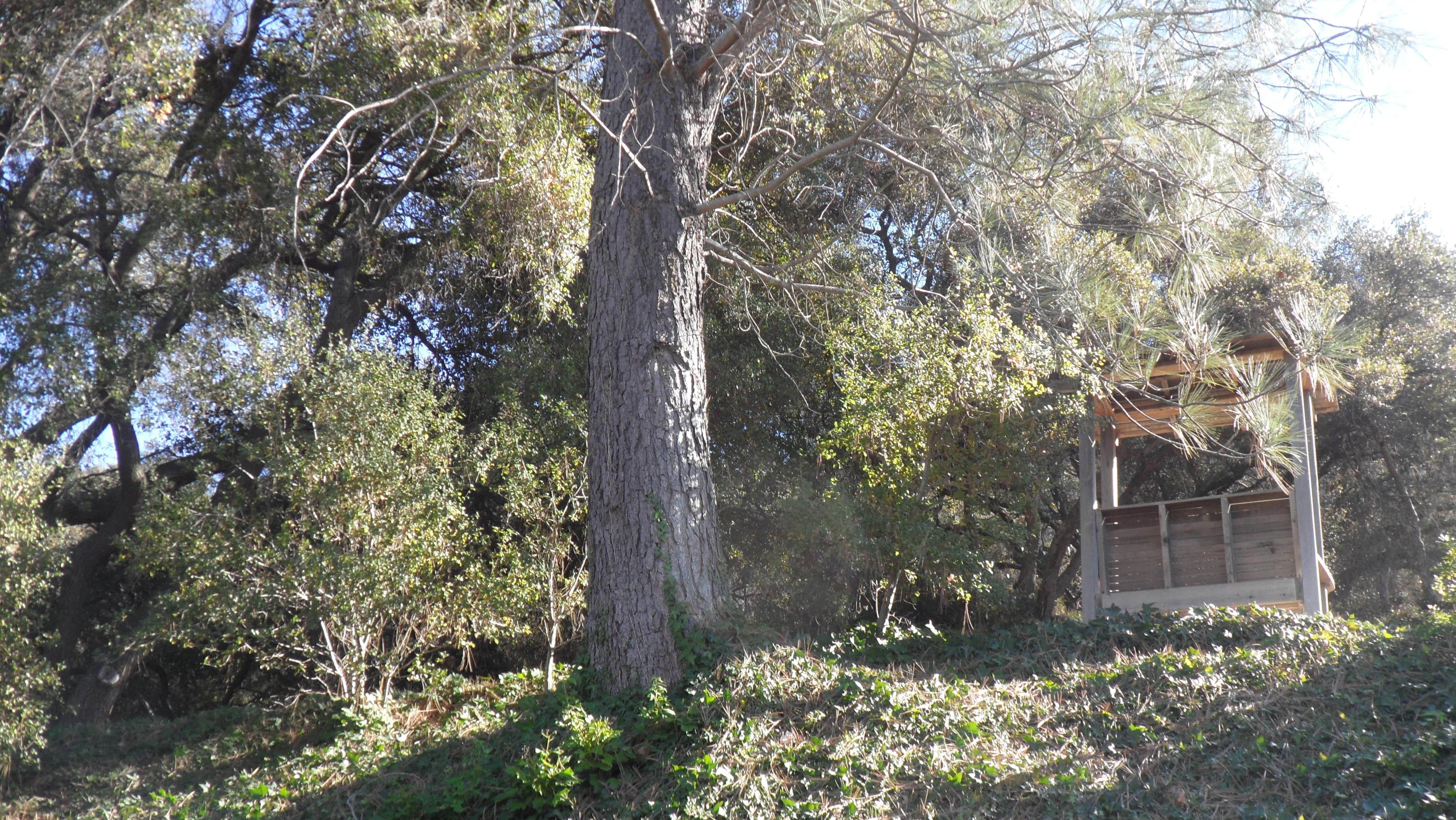 Golden Door Spa: Secret Gardens & Meeting Deborah Szekely