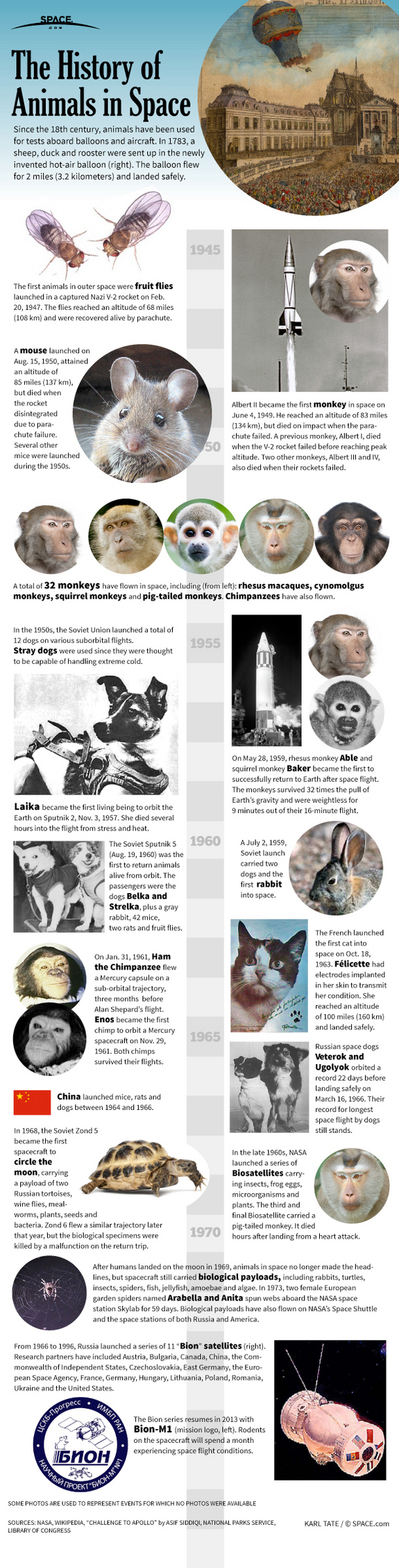 Find out about the history of animals used for testing in space flight, in this SPACE.com infographic.