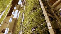 Vertical Growing Increases Efficiency And Yield