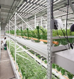 design a new grow room floorplan using activrac the activrac system consists of shelving or pallet racking mounted on carriages that move along rails  [ 1925 x 1283 Pixel ]