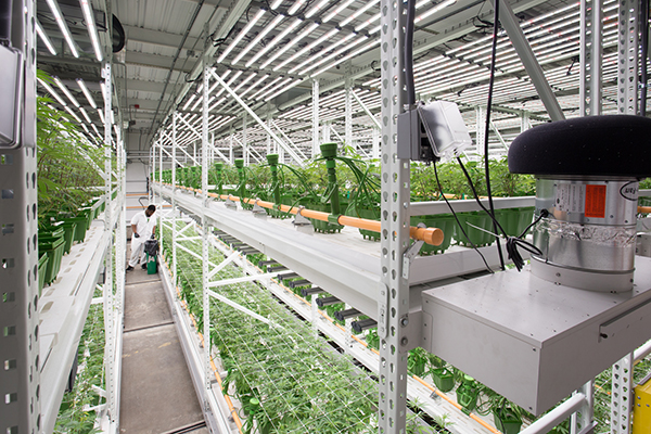 grow room designs with pictures and diagram test terminal block wiring case study commercial setup design a new floorplan using activrac the system consists of shelving or pallet racking mounted on carriages that move along rails