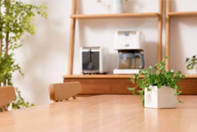 インテリアにおすすめの観葉植物