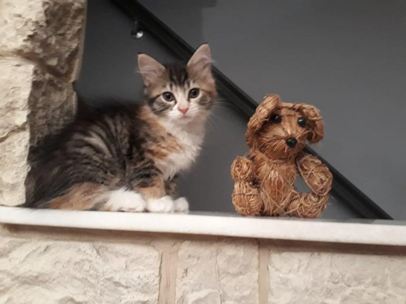 Galis & Gala ♀ chatons FA – réservés