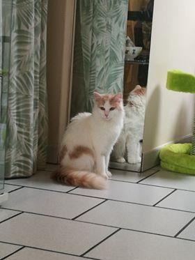 Oriane ♀ Bar à chats – réservée