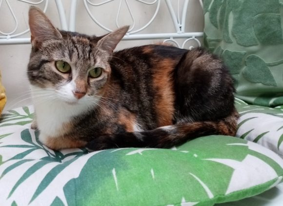 Kefta ♀ Bar à chats