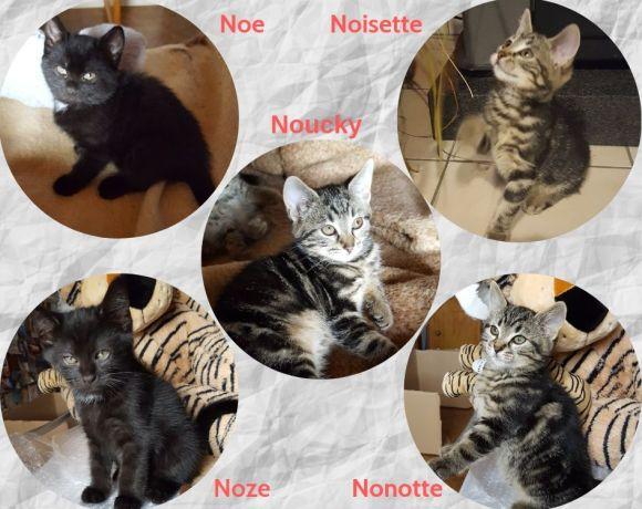 Les 5 «N» ♂ & ♀ chatons – FA