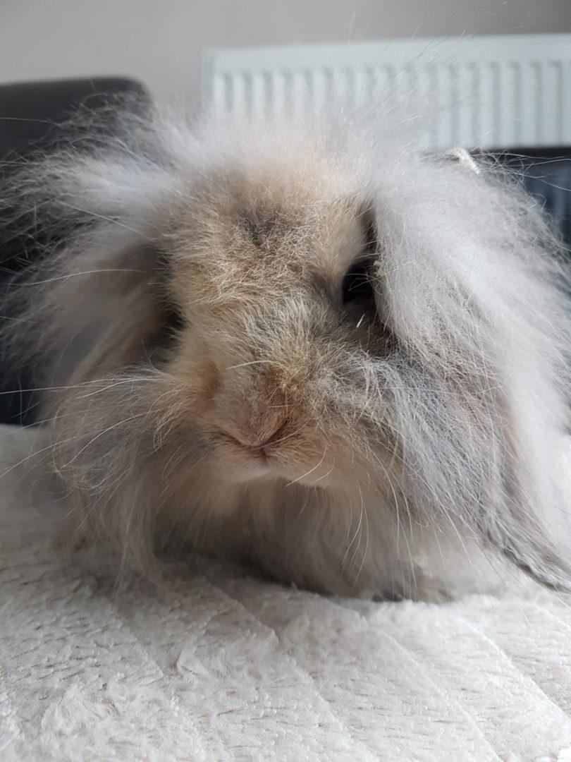 Bunny ♀ FA