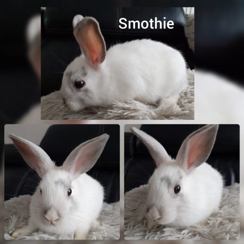 Smoothie –  FA