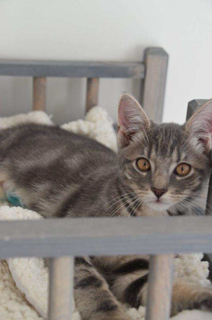 Queen & Quinoa ♀ chatons – FA