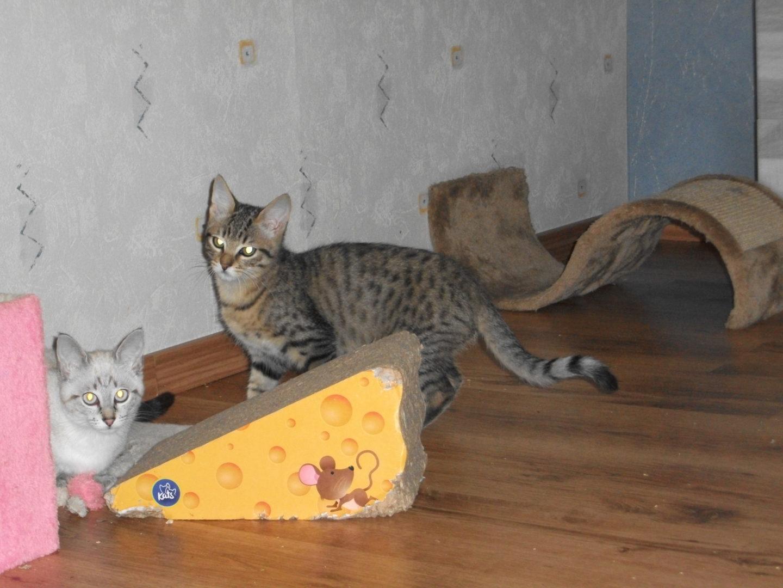 Woody ♂ chaton – FA