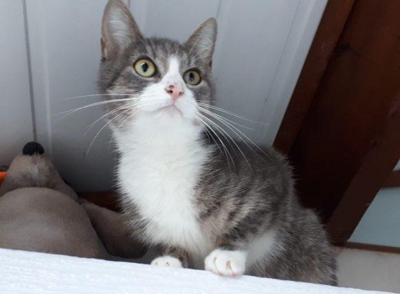 Betty ♀ grand chaton – SPA