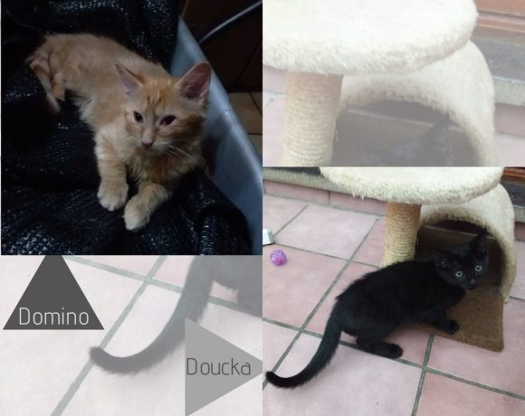 Domino ♂ & Douchka  ♀ chatons – FA