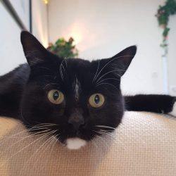 Félix ♂ Bar à chats