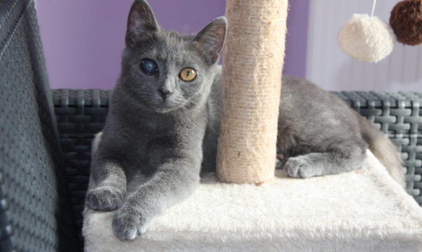 Azel ♂ grand chaton – FA