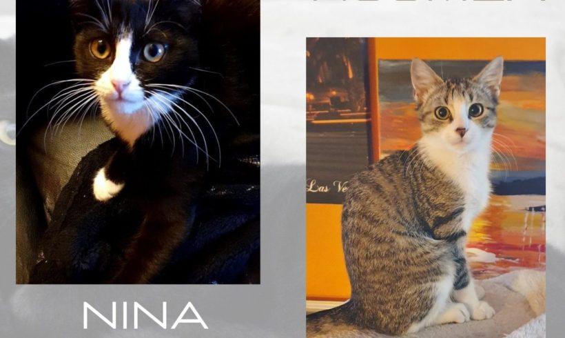 Nouméa ♂ & Nina ♀  – chatons – FA (demande en cours)