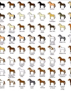 found this amazing chart today with all the possible types of color and pattern in  horse love also awesome discussions rodeo spalding labs rh