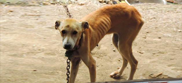 Spa-Martinique-chien-maltraité