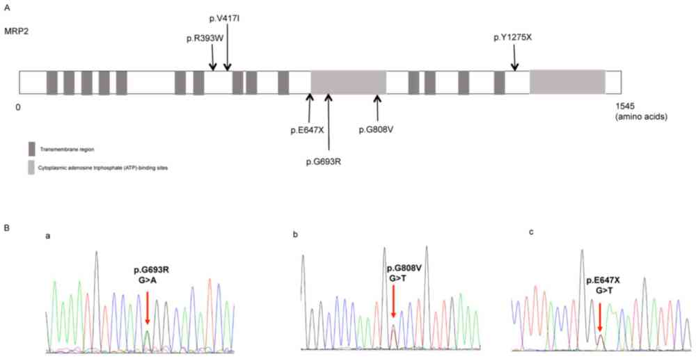 medium resolution of figure 1 distribution of the identified abcc2 variants and the representative sequencing of the three novel variants a distribution of the six abcc2