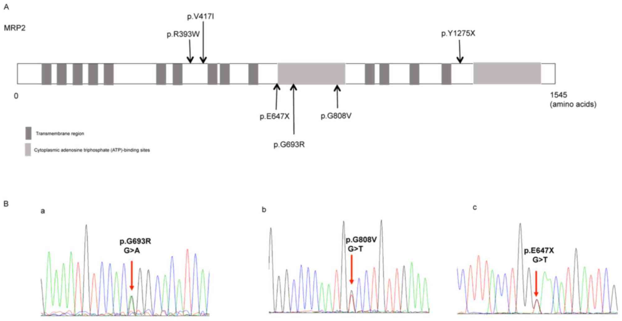 hight resolution of figure 1 distribution of the identified abcc2 variants and the representative sequencing of the three novel variants a distribution of the six abcc2
