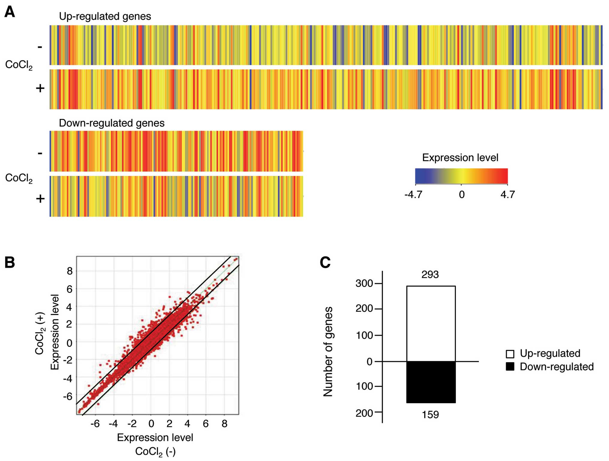 The Hypoxia Mimetic Agent Cobalt Chloride Induces Cell Cycle Arrest And Alters Gene Expression