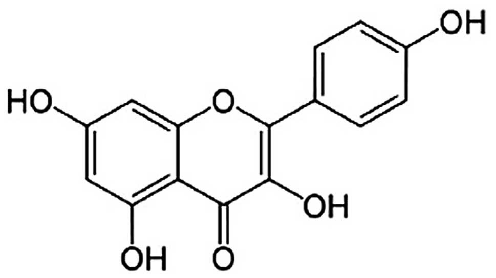 Kaempferol suppresses lipid accumulation in macrophages