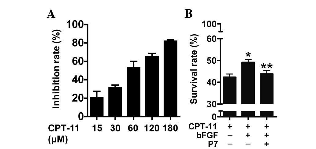 P7 peptides targeting bFGF sensitize colorectal cancer
