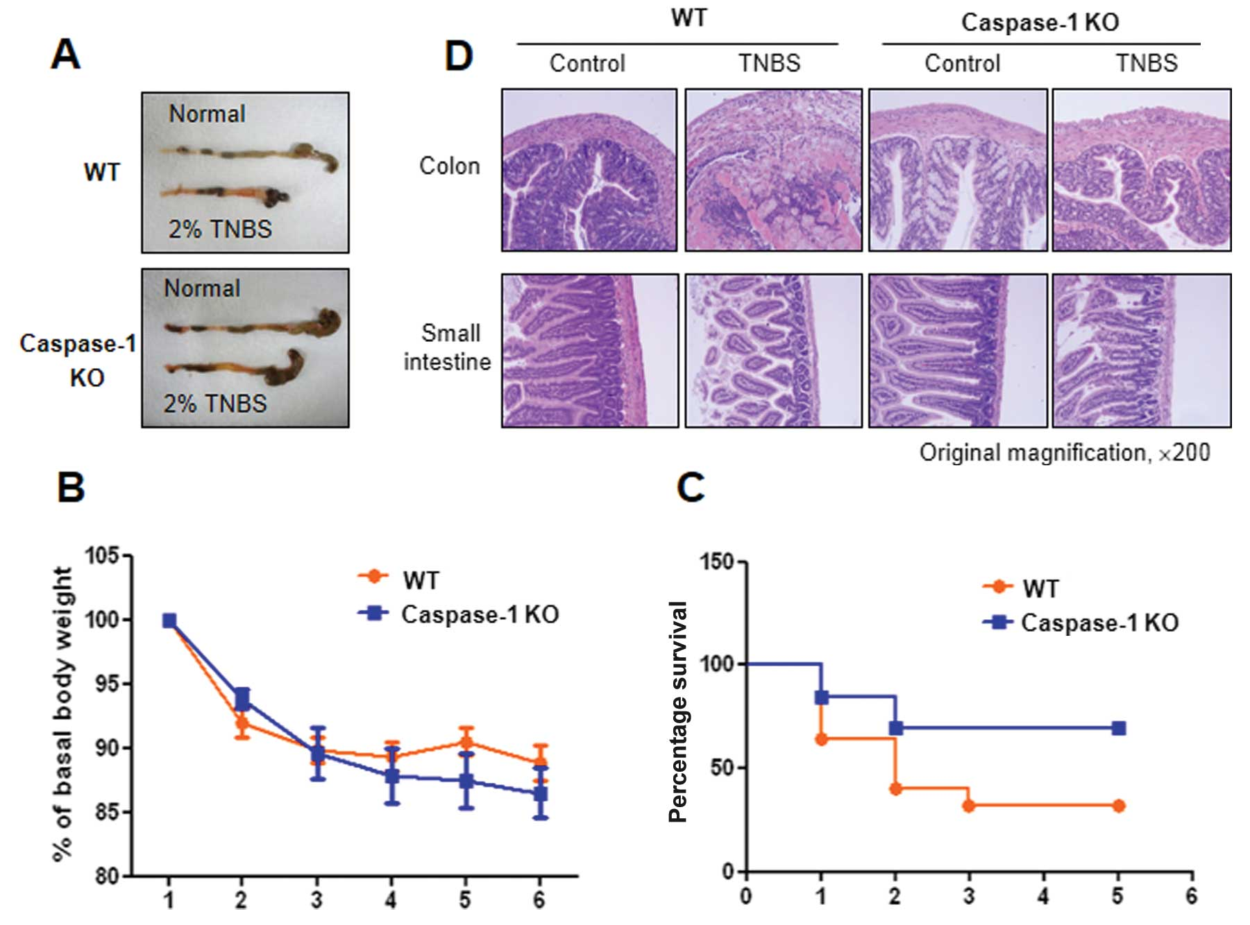 hight resolution of figure 5 induction of acute colitis in c57bl6 wild type wt and caspase 1 knockout ko mice by the intrarectal injection of 2 2 4 6 trinitrobenzene