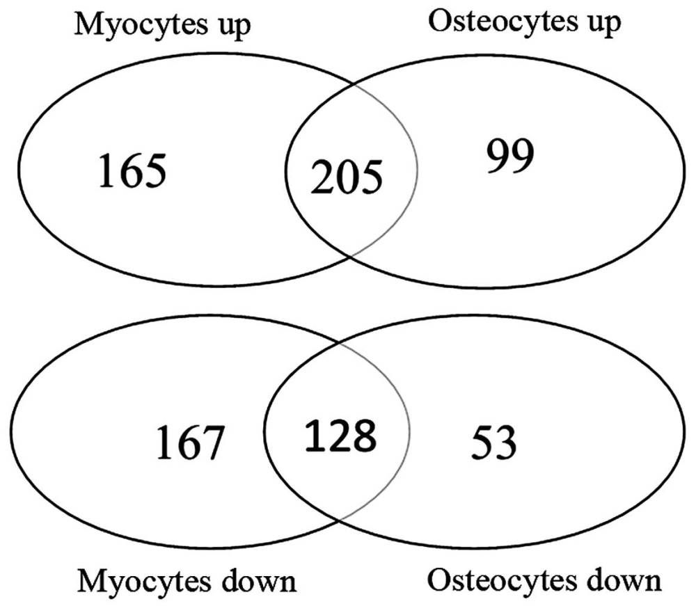 medium resolution of venn diagram of shared genes and unshared genes identified by comparisons myocytes vs human adipose tissue derived stem cells hascs and osteocytes vs