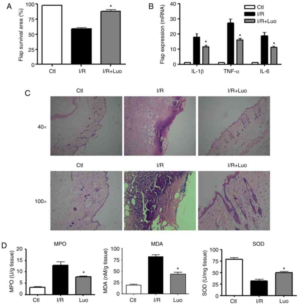 medium resolution of  d effect of luteolin administration on i r induced oxidative damage in skin tissue the relevant biomarkers were assessed using commercial kits