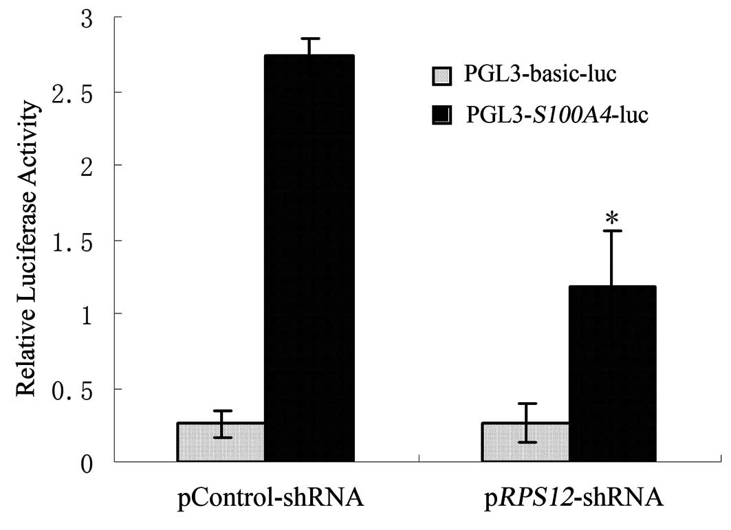 Rps12 Specific Shrna Inhibits The Proliferation Migration Of Bgc823 Gastric Cancer Cells With