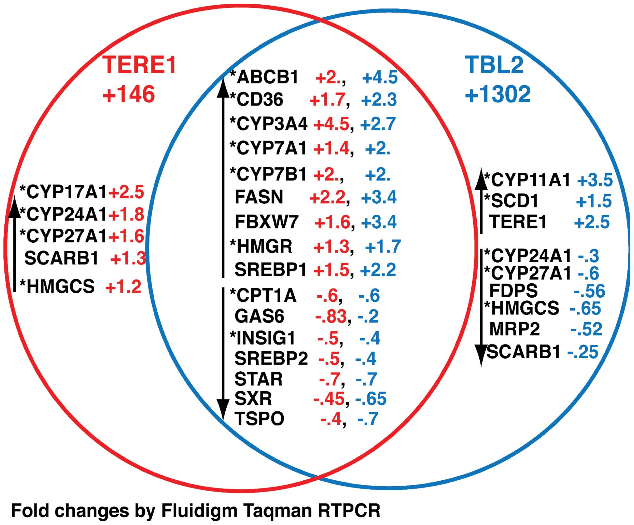 venn diagram dna and rna sony cdx gt24w wiring ectopic expression of the tere1 ubiad1 protein inhibits