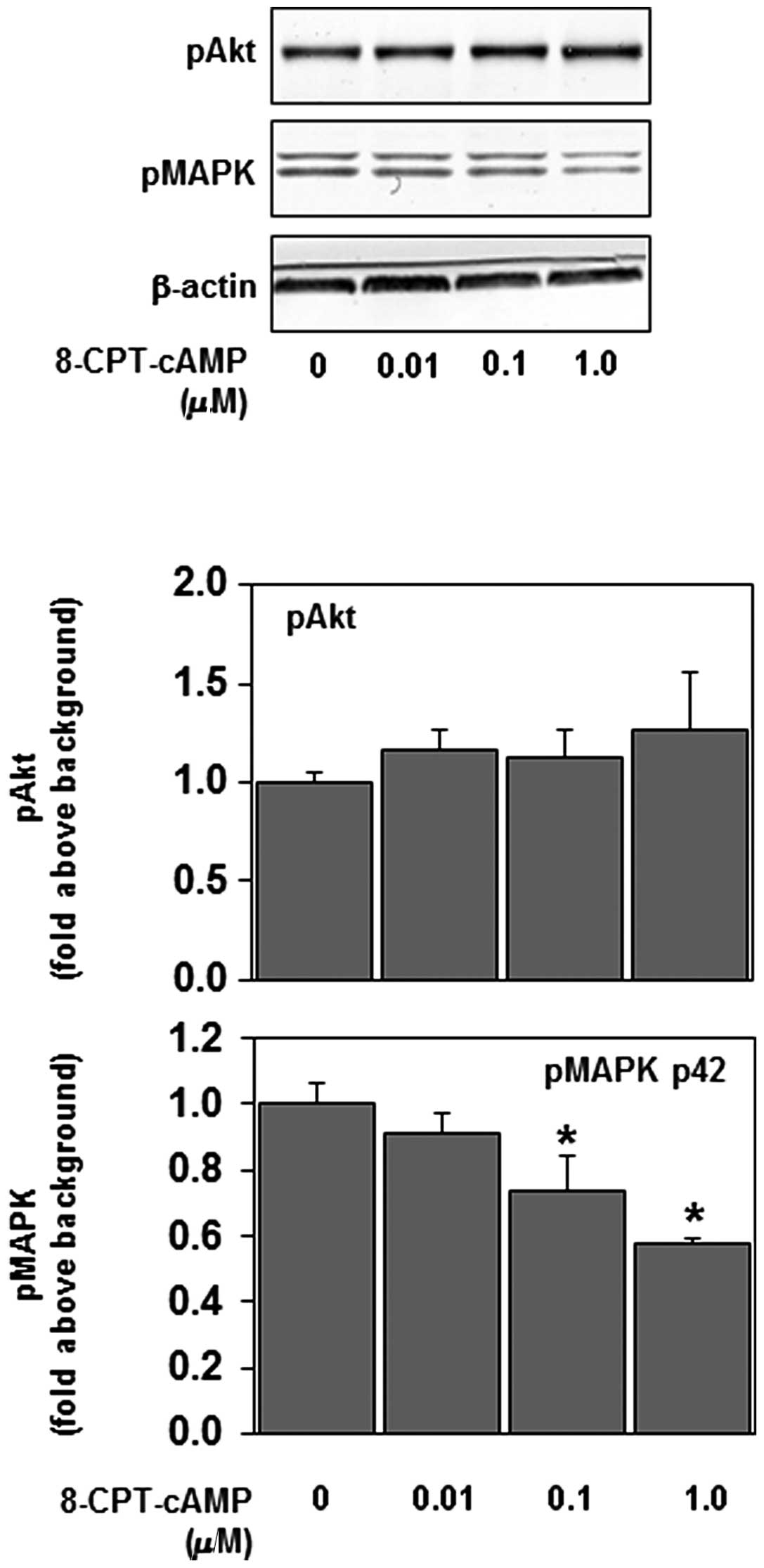 Targeted activation of PKA and Epac promotes glioblastoma