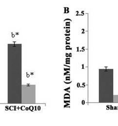 effect of coq10 on levels of oxidative stress markers in rats with sci a sod levels and b mda levels values are expressed as the mean standard  [ 1795 x 488 Pixel ]