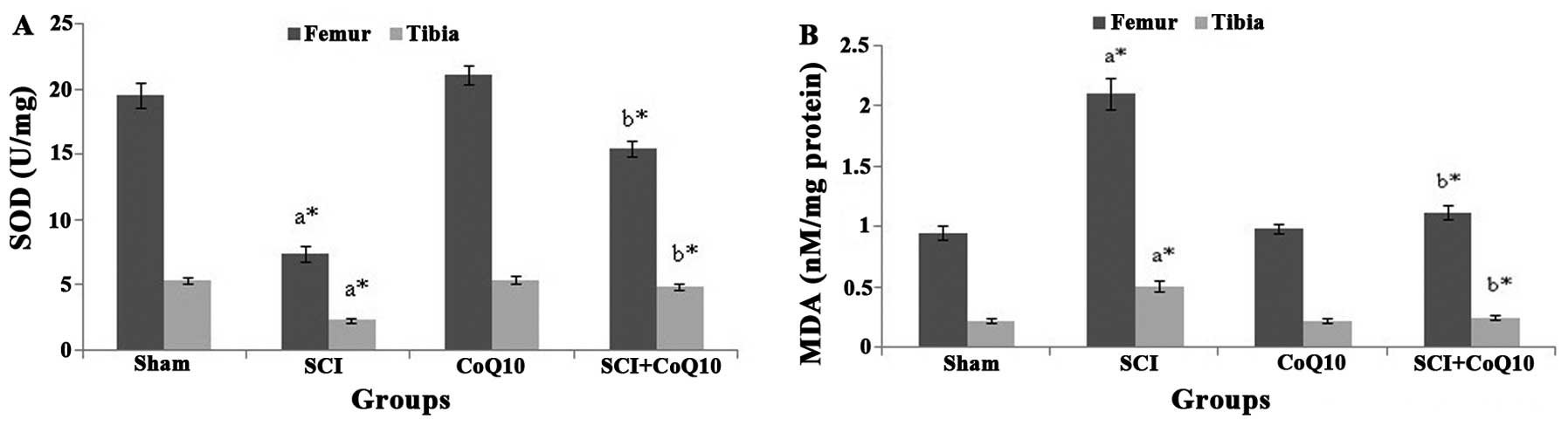 hight resolution of effect of coq10 on levels of oxidative stress markers in rats with sci a sod levels and b mda levels values are expressed as the mean standard